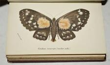 W. F. Kirby HANDBOOK TO THE ORDER LEPIDOPTERA MOTHS 1897 LLOYDS WITH 32 Plts V