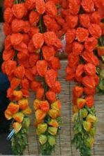 Chinese Lantern 15 Seeds!  FOR CRAFTS/ DECORATING  Comb. S/H! SEE OUR STORE!
