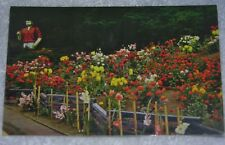 Vintage Old Postcard 1960's Dahlia Garden at Trees of Mystery Near Crescent City