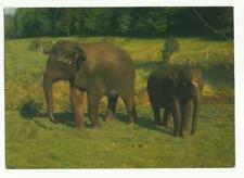 Indian Elephants, Cricket St Thomas postcard