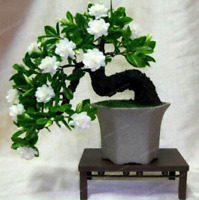 100 Pcs Seeds Gardenia Bonsai Cape Jasmine Garden Potted Amazing Flowers NEW X Z