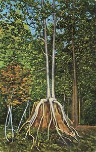 Postcard Ephemera Twin Birches Manistique MI Michigan Kitchi-Tiki-Pi Big Spring