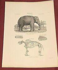 ELEPHANT MASTODON JW LOWRY GIA LANDSEER 1851 Zoological Animal Book Print