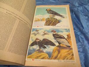Das Tierreich II , Sammelbilderalbum , VOSS  Kunstbilder , Margarine Reklame , B