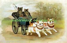 Antique Victorian~Calico Cats Pulling Carriage w Cat Passengers~New Note Cards