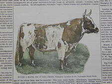 The Cultivator & Country Gentleman, in-text illustration #15 Ayrshire Bull