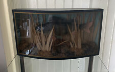 More details for vintage large perch in glass display case 59.5cm x 14.5cm x 33cm good condition