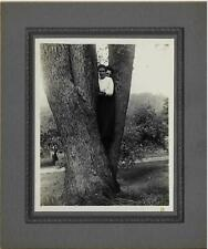 Sisters Posing in Crotch of Tree / Antique Cabinet Photo