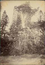 Nouvelle Calédonie, La Brousse (Grande Terre) Vintage albumen print. Tirage al