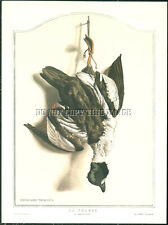 ANTIQUE REPRO 8X10 DEAD HANGING GAME PHOTO STILL LIFE PRINT      GOLDENEYE DUCK