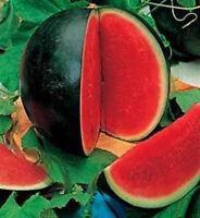 Water Melon Sugar Baby 30 seeds GIANT BLACK Vegetable Citrullus lanatus