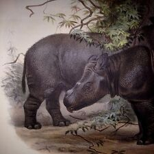 SCLATER DEER RHINOCEROS ZOOLOGICAL SOCIETY LONDON RARE HAND COLORED RHINO BOOK