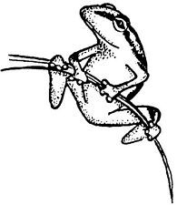 Mounted Rubber Stamps, Frog Stamps, Wildlife, Frogs, Nature, Tree Frog on Branch