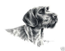 German Wire Haired Pointer Drawing Dog 8 x 10 Art Print by Artist Djr