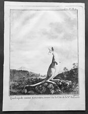 1774 Capt. Cook, S. Parkinson & G. Stubbs - Antique Print of a Kangaroo in 1770