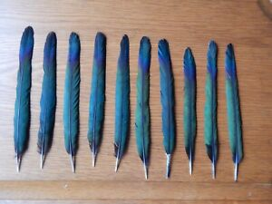 """10  Magpie  Center Tail Feathers  8"""" - 9"""" Fly Tying Arts Crafts"""