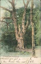 Miss C Reeve. 42 Whitworth Road, Copnor, Portsmouth 1904 - 'J G E'  (ref:L.1925)