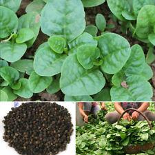 100 pcs Gynura cusimbua seeds Green Vegetable