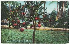 A GRAPEFRUIT TREE - Florida - United States - c1900s era postcard