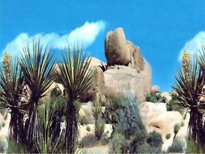 """15"""" TALL Cactus Stone Waterproof Aquarium / Vivarium Background Poster Picture"""