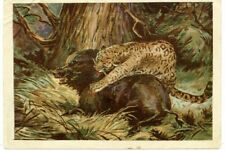 1930s Leopard Panther Big Cat Wild Boar Russian Unposted postcard