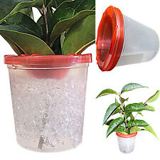 Stick Insect,Leaf Insect Cage,Twig Pot Pair + FREE ATOMISER ,LIMITED OFFER