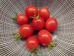 Vishenka Rozovaja Tomate - Tomato 5+ Samen - Saatgut - Seeds - Gemüsesamen
