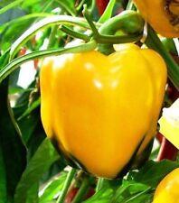 """Capsicum """"Golden California Wonder"""" 30 Seeds Organic"""