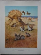 Game Birds of America 1944 Pinnated Grouse Partridge Hunt Frameable ART Vintage