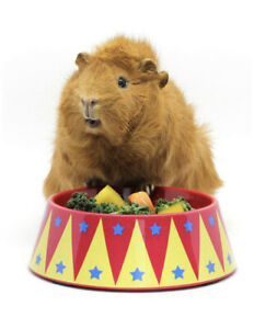 Guinea Pig Toys And Accessories Circus Themed FOOD CRAVING TAMER Food Bowl