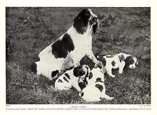 1930s Antique Springer Spaniel Dog Print Bristles Pet Mother and Puppies 3537-P