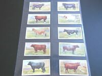 1916 BRITISH LIVE STOCK cattle, cow, pig, horse set 30 cards Tobacco Cigarette