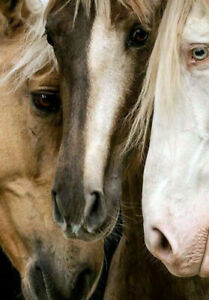 BEAUTIFUL WILD HORSES  * LARGE A3 SiZE QUALITY CANVAS ART PRINT *