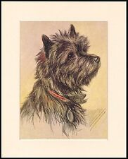 CAIRN TERRIER CUTE SEATED DOG MOUNTED DOG PRINT READY TO FRAME