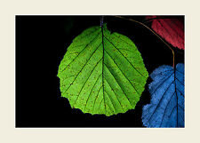GREEN BLUE RED LEAF