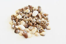 "1 oz Tiny Indian Ocean Shell Mix Mini Shells 1/4"" Seashells Crafts Beach Decor"