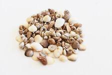 "1 oz Tiny Indian Ocean Shell Mix Mini Shells 1/4"" Seashells Crafts Beach Decor"