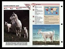 """SAANEN DOMESTIC GOAT"" WILD LIFE FACT FILE ANIMAL CARD/HOME SCHOOL STUDY"