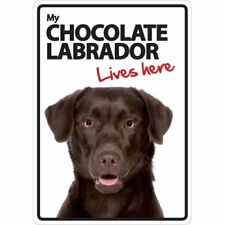 Chocolate Labrador Lives Here A5 Plastic Sign