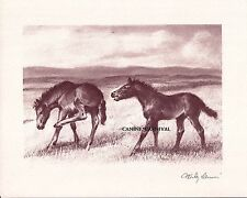 2 COLTS FOALS IN PASTURE VINTAGE ART RARE ORIGINAL PROPERTY OF Wesley Dennis