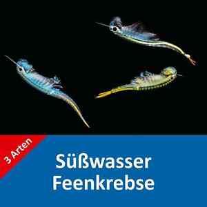 Süßwasser Feenkrebse Eier, 3 Arten, über 1.000 Eier, Anleitung - Fairy shrimps