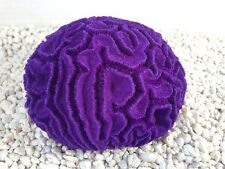 Made In The USA-Large (5 Inches long!) Purple Replica Brain Coral-Aquarium Decor