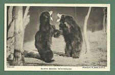 C1930'S PC - SLOTH BEARS, WHIPSNADE ZOO - LONDON ZOOLOGICAL SOCIETY