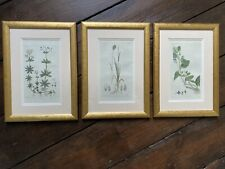 More details for beautiful set of 3 hand coloured 19th century botanical prints engravings