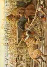 A4 Photo Fuertes Louis Agassiz 1874 1927 Book of Dogs 1919 Retrievers & Spaniel