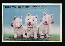 Scotland Midlothian EDINBURGH Dogs West Highland Terriers Pocket Novelty PPC