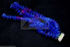 """(S24)16"""" Long Realistic Artificial Plants for Aquarium/ Fish Tank(SHIP FROM USA)"""