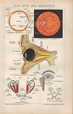 Chromo-Lithografie 1903: DAS AUGE DES MENSCHEN. Medizin Organe Linse Pupille