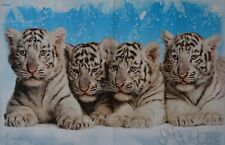 TIGER - A3 Poster (ca. 42 x 28 cm) - Weiße Königstiger Baby Tier Plakat NEU