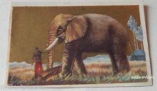 CHROMO Image Chocolat L'AIGLON : CONGO BELGE : L'ELEPHANT de olifant N° 102